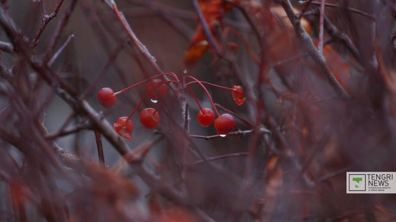 Қазақстанның бірнеше өңірінде аяз бен құмды дауыл болады